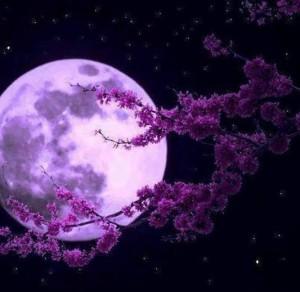 ay burcu nedir