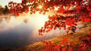 Sonbaharda_yapraklar