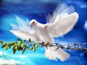 beyazgüvercin