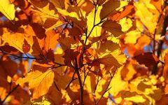 sarıyazınbüyüsü
