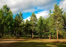 ormanın anlamı
