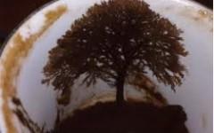 kahve falında ağaç