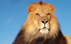 falda aslan görmek