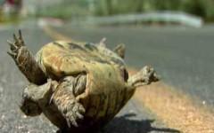 Ters Dönen Kaplumbağa