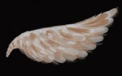 kahve falı melek kanadı